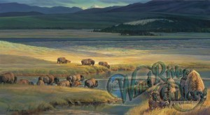 buffalo-valley-by-nancy-glazier-6079[1]