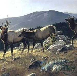 high-country-by-nancy-glazier-4064[1]